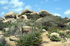 Aruba Ayo Rock Formations cruise excursion