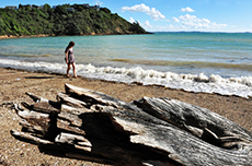 Auckland Waiheke Walking Tour cruise excursion