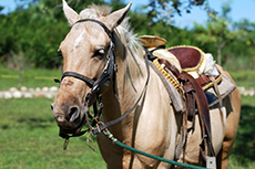 Belize City Horseback Riding Tour