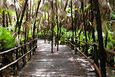 Belize City Bacab Jungle Park