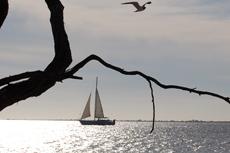 Bonaire Sailing