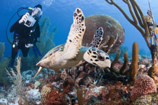 Bonaire Scuba Diving