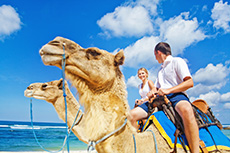 Cabo San Lucas Camel Ride cruise excursion