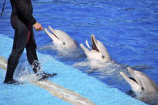Cabo San Lucas Dolphin Trainer Program