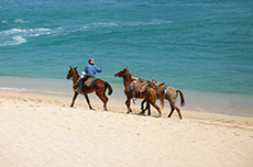 Cabo San Lucas Horseback Ride cruise excursion
