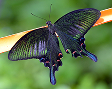 Cairns Butterfly Sanctuary cruise excursion