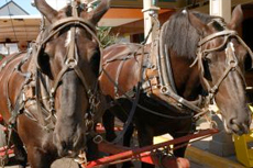 Cartagena (Colombia) Horse Carriage Tour cruise excursion