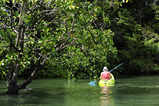 Cartagena (Colombia) Mangrove Eco Canoe Journey cruise excursion