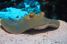 Castaway Cay Stingray Adventure Excursion Reviews