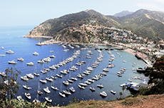 Catalina Island (California) Island Tour