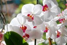 Charleston Magnolia Gardens