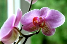 Darwin Jenny's Orchid Garden