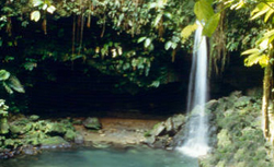 Dominica Emerald Pool cruise excursion