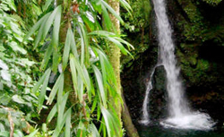 Dominica Rainforest Tour cruise excursion