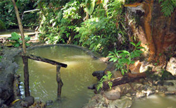 Dominica Hot Springs cruise excursion