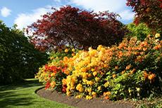 Dunedin Botanical Garden