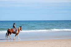 Ensenada Horseback Tour