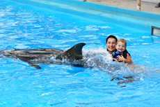 Falmouth Swim With Dolphins