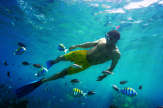Falmouth Snorkeling