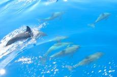 Gibraltar Dolphin Watch
