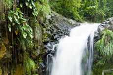 Grenada Spices and Waterfalls