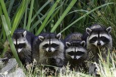 Guadeloupe Les Mamelles Zoological Park