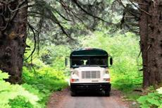 Haines Wilderness Safari