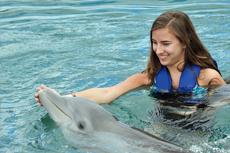 Hamilton Dolphin Swim