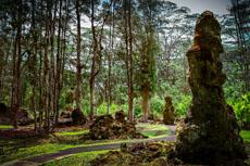 Hilo Lava Tree State Park