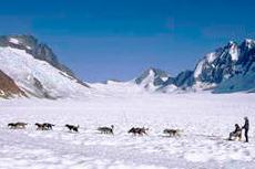 Juneau Dog Sledding cruise excursion