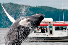 Juneau Whale Watching cruise excursion