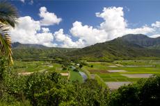 Kauai Kilohana Plantation