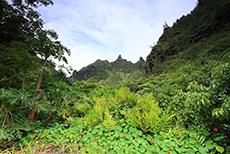 Kauai Botanical Gardens