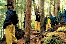 Ketchikan Rainforest Hike