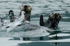 Ketchikan Wildlife Cruise cruise excursion