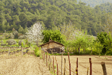 Kusadasi Kirazli Village