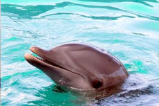 Madeira (Funchal) Dolphin Watch cruise excursion