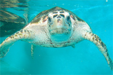 Manzanillo Turtle Farm cruise excursion