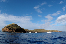 Maui Molokini Crater cruise excursion