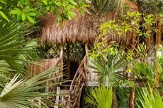 Mazatlan Jungle Tour