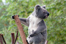 Melbourne Healesville Sanctuary