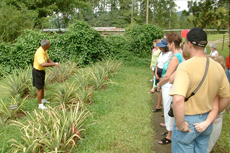 Montego Bay Plantation Tour