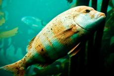 Monterey Monterey Aquarium