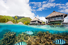Moorea Island Tour cruise excursion