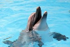 Nassau Blue Lagoon Dolphin Swim cruise excursion