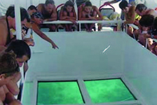 Nassau glass bottom boat