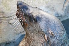 Nassau Sea Lion Encounter