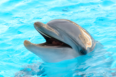 Nassau Dolphin Encounter cruise excursion