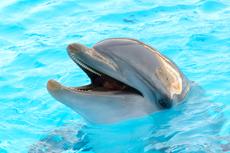 Nassau Dolphin Encounter