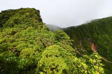Nevis Rainforest Hiking